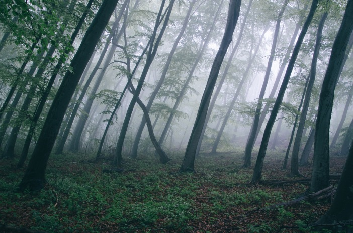 forest-trees-northwestisbest-exploress
